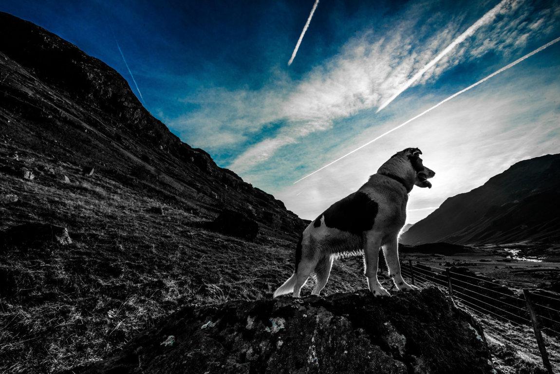 Cani in montagna e turismo alpino