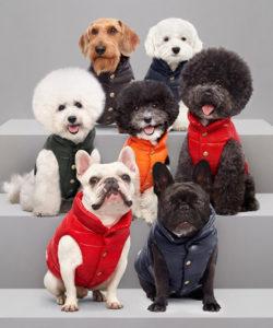 Moncler Poldo Dog Couture 2017 (foto: sito Moncler).