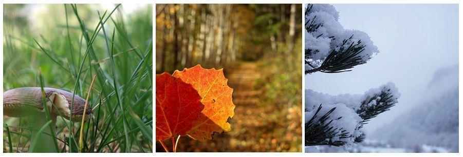 natura bellezza fungo foglie neve
