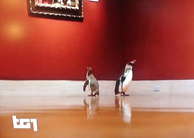 tg1 servizio pinguini museo